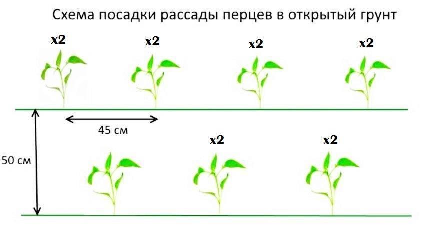 Еще раз о гнездовой посадке плодовых, ягодных и орехоплодных растений | fermer.ru - фермер.ру - главный фермерский портал - все о бизнесе в сельском хозяйстве. форум фермеров.