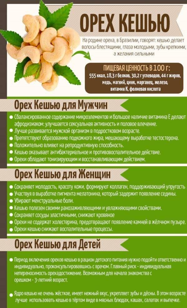 Лещина - полезные свойства и противопоказания, рецепты