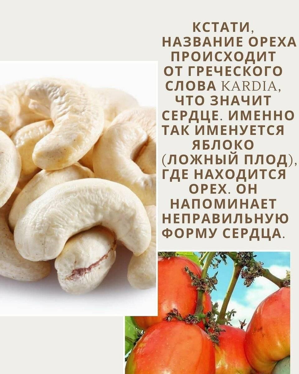 С какого возраста можно давать ребенку орехи? польза и вред грецких и кедровых орехов, кешью и фисташек, аллергия