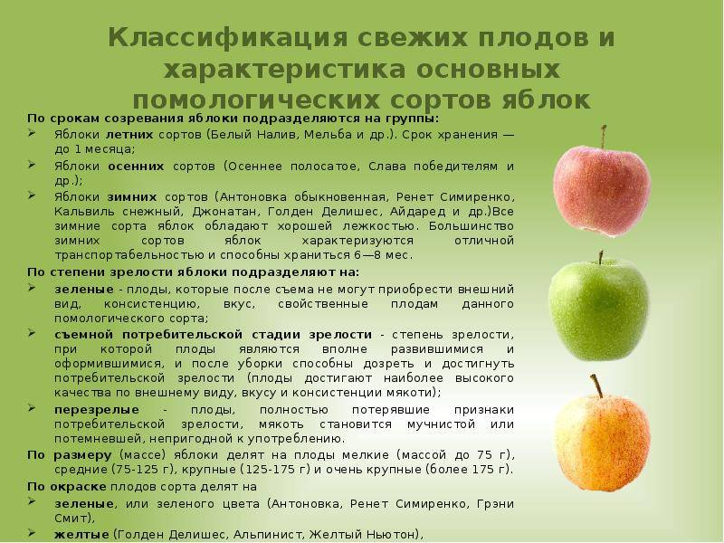 Грецкий орех саратовский идеал: описание, характеристика, плюсы и минусы, отличие от других сортов, польза и вред, применение, правила выращивания