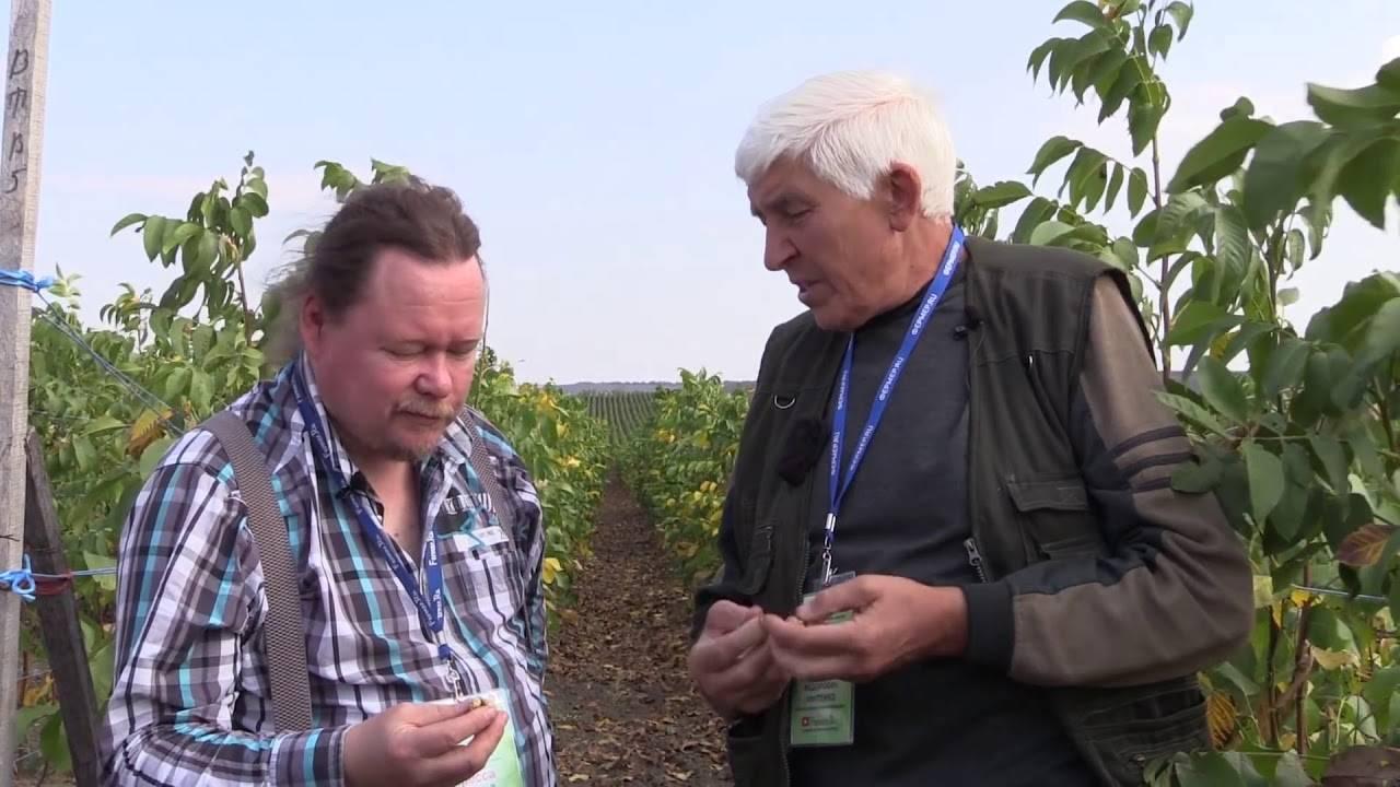 Вступление в ореховодство, часть 3. посадка орехового сада.   fermer.ru - фермер.ру - главный фермерский портал - все о бизнесе в сельском хозяйстве. форум фермеров.
