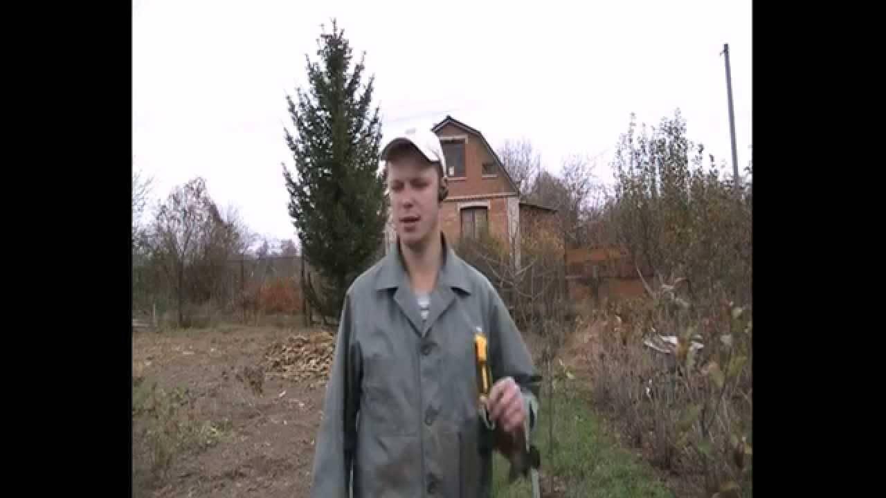 Вступление в ореховодство, часть 3. посадка орехового сада.