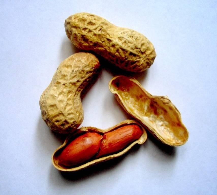 Арахис, или земляной орех . уход, выращивание, размножение. фото — ботаничка.ru