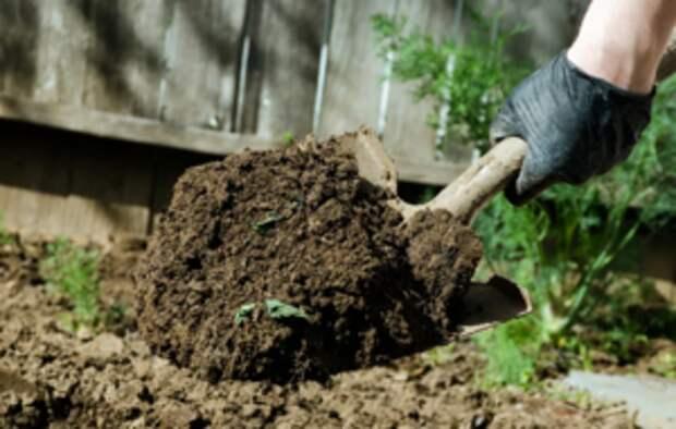 Сидераты и их роль в сельском хозяйстве