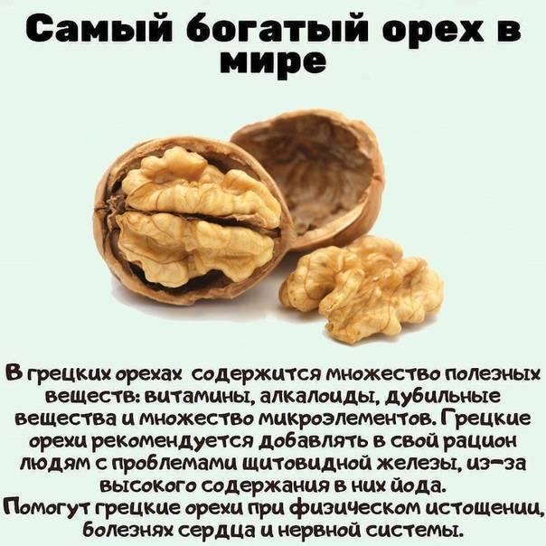 Калорийность грецких орехов: сколько энергии в 100 граммах, в 1 штуке и можно ли похудеть с их помощью