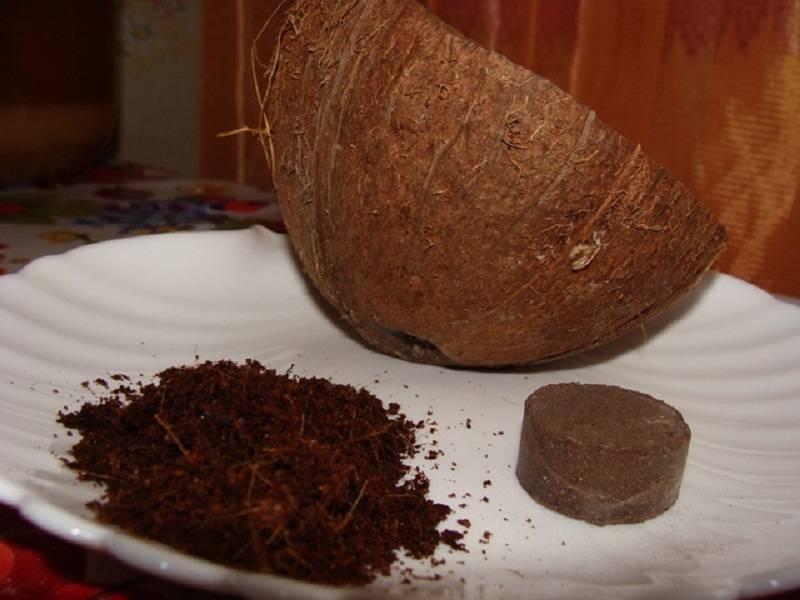 Кокосовый субстрат для рассады: как выращивать саженцы помидор и других овощей в экстракте брикетов из кокоса, особенности применения смеси из торфа