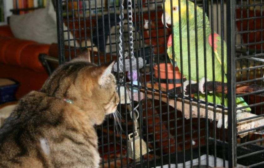 Можно ли кошкам давать собачий корм
