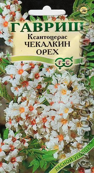 Орех пекан: посадка и уход - выращивание в россии в подмосковье и беларуси