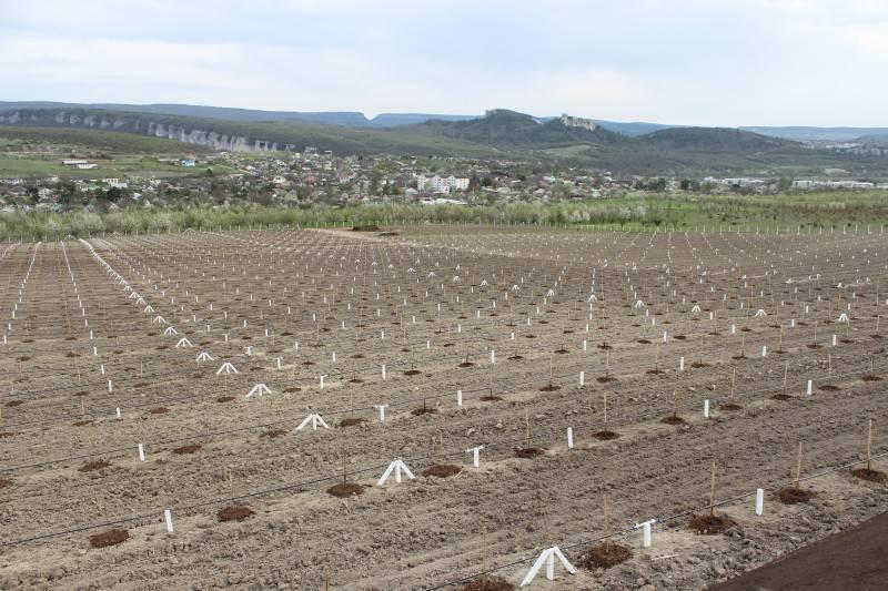 Как построить бизнес на выращивании фундука: опыт уманского hazelstar | экономическая правда