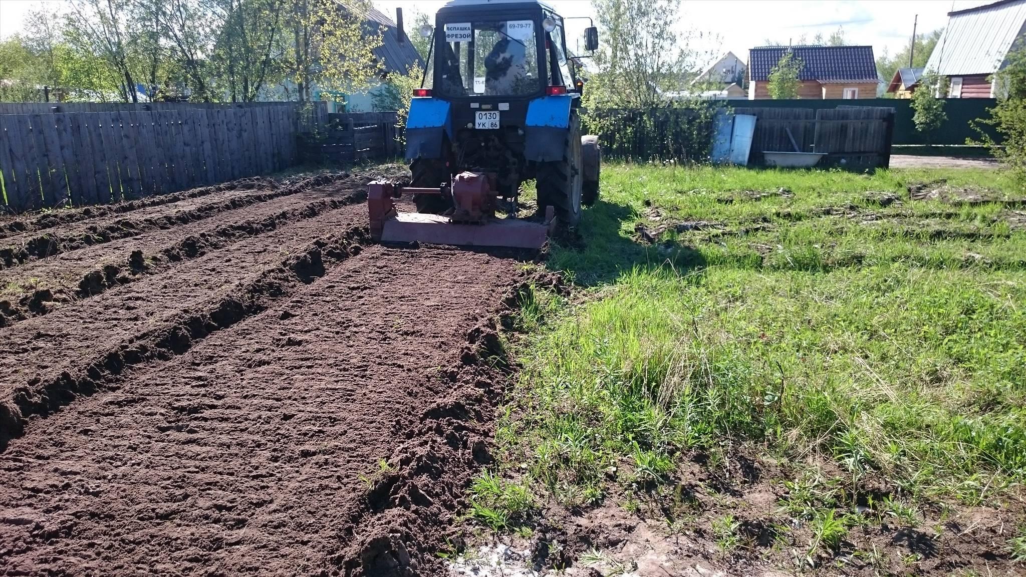 Когда и как правильно сеять горчицу как сидерат, особенности посева, для улучшения почвы, когда закапывать