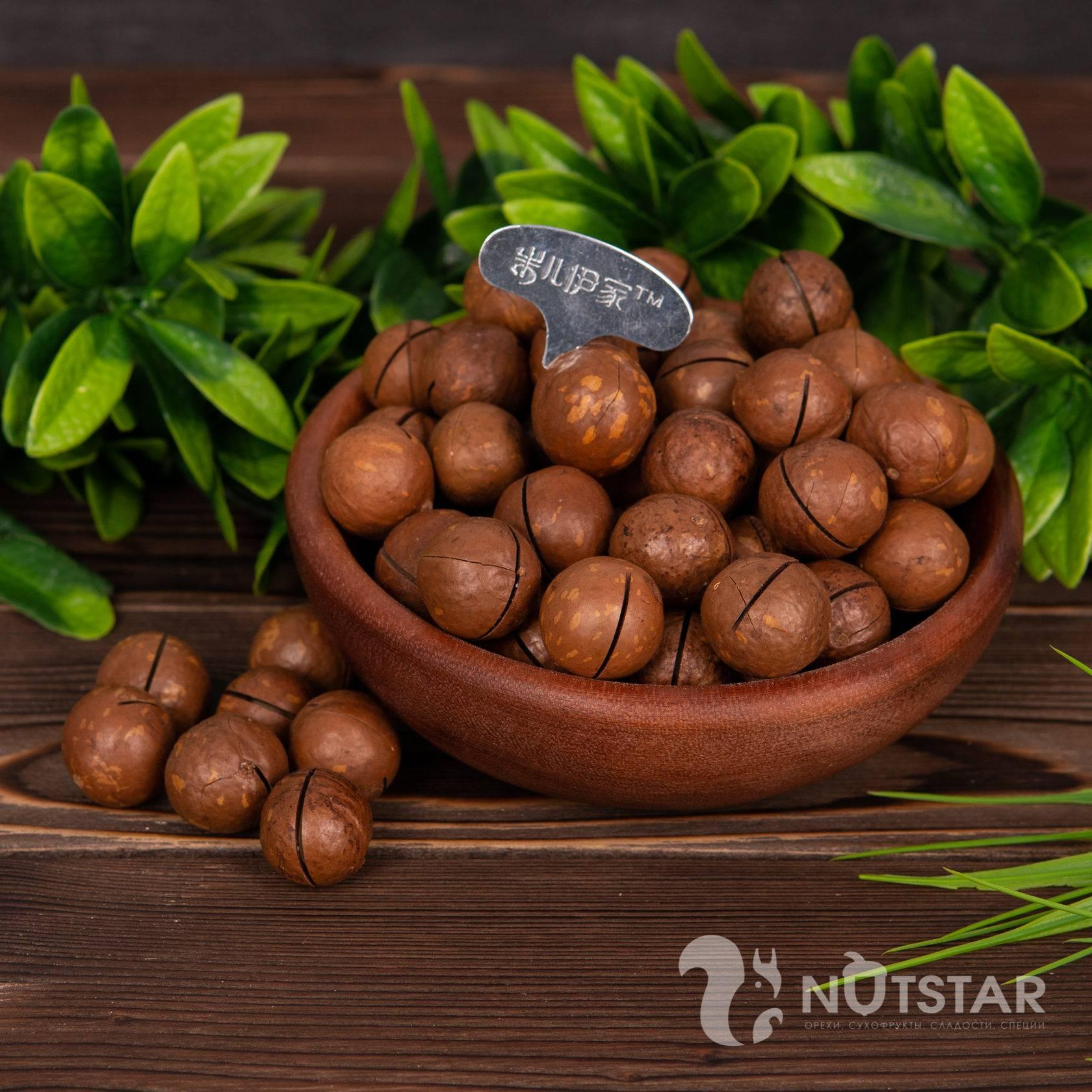 Макадамия орех из австралии. свойства, польза и вред, происхождение и цена макадамии | сад и огород.ру