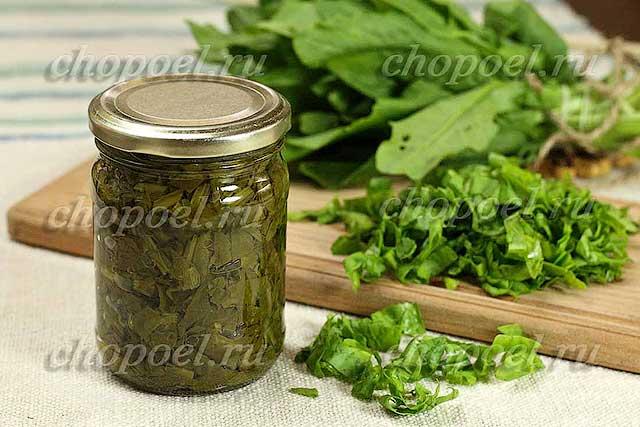 Быстрая заготовка шпината на зиму: заморозка и другие простые рецепты приготовления в домашних условиях