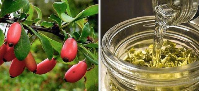 Сушеный барбарис: куда добавляют, польза ягод, как высушить в духовке, для плова, фото