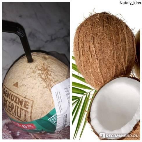 Что такое питьевой кокос? Польза и вред, противопоказания и сферы применения