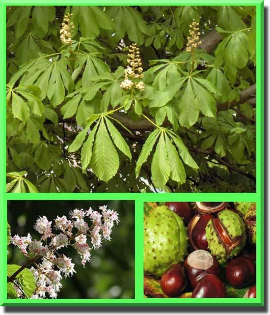 Растения россии — деревья, кустарники, травы и другая флора страны