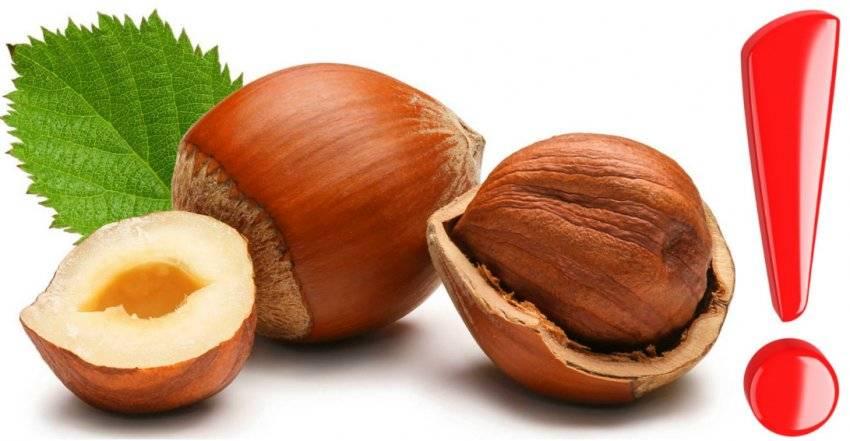 Листья орешника (лещины): лечебные свойства и противопоказания