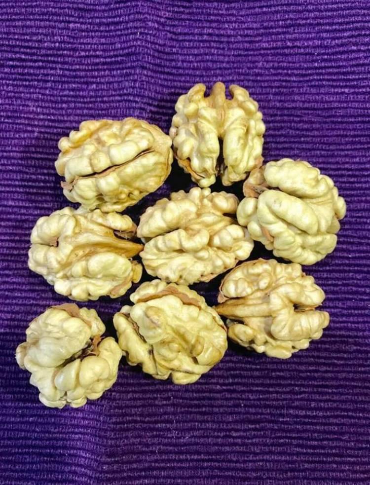 Виды орехов - полный обзор сортов от а до я. 100 фото, видео, отзывы, лучшие сорта, польза и вред для человека