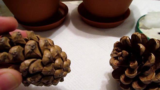 Сосна румелийская (31 фото): описание балканской сосны. зимостойкость македонской сосны. ее выращивание и уход