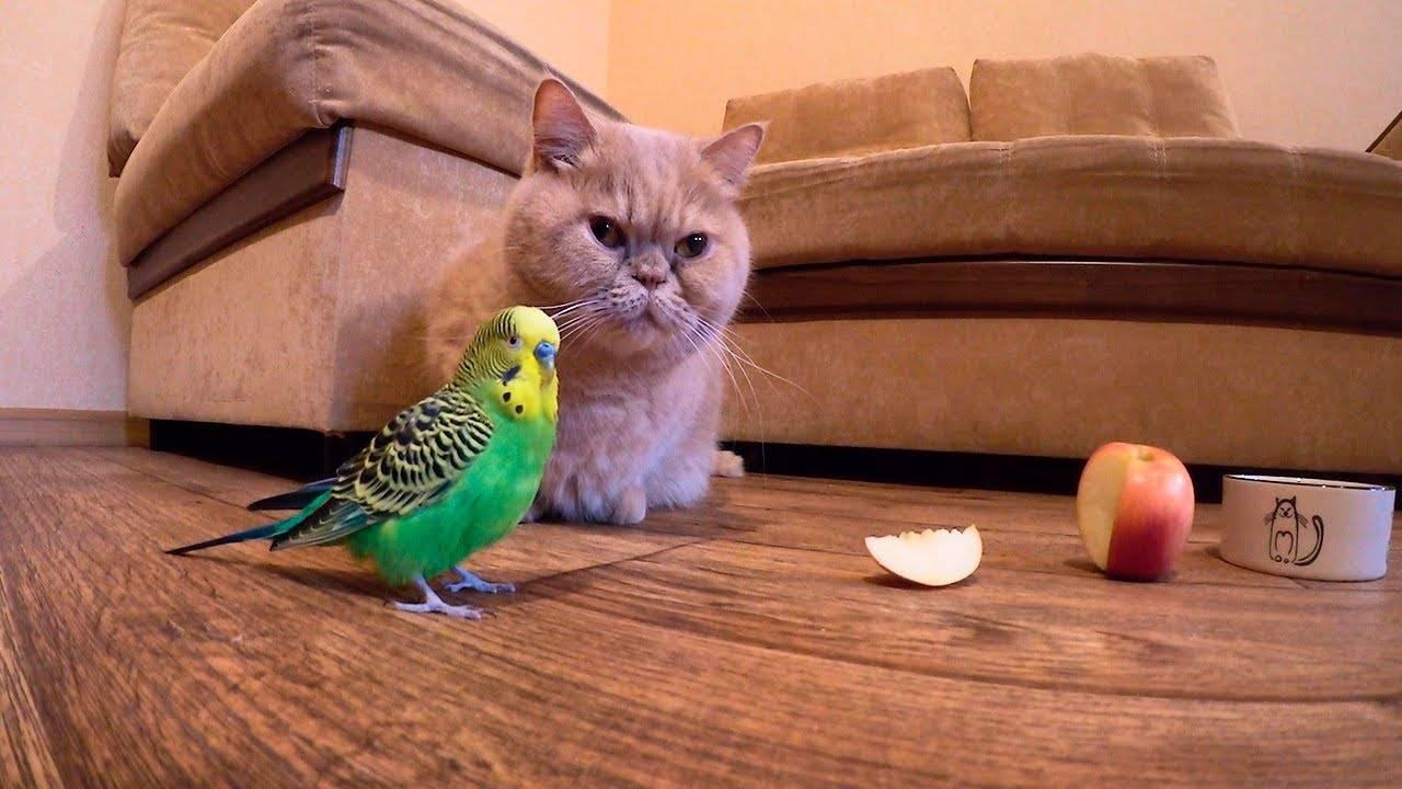 Можно ли кормить волнистого попугая только готовым кормом - кошки и собаки