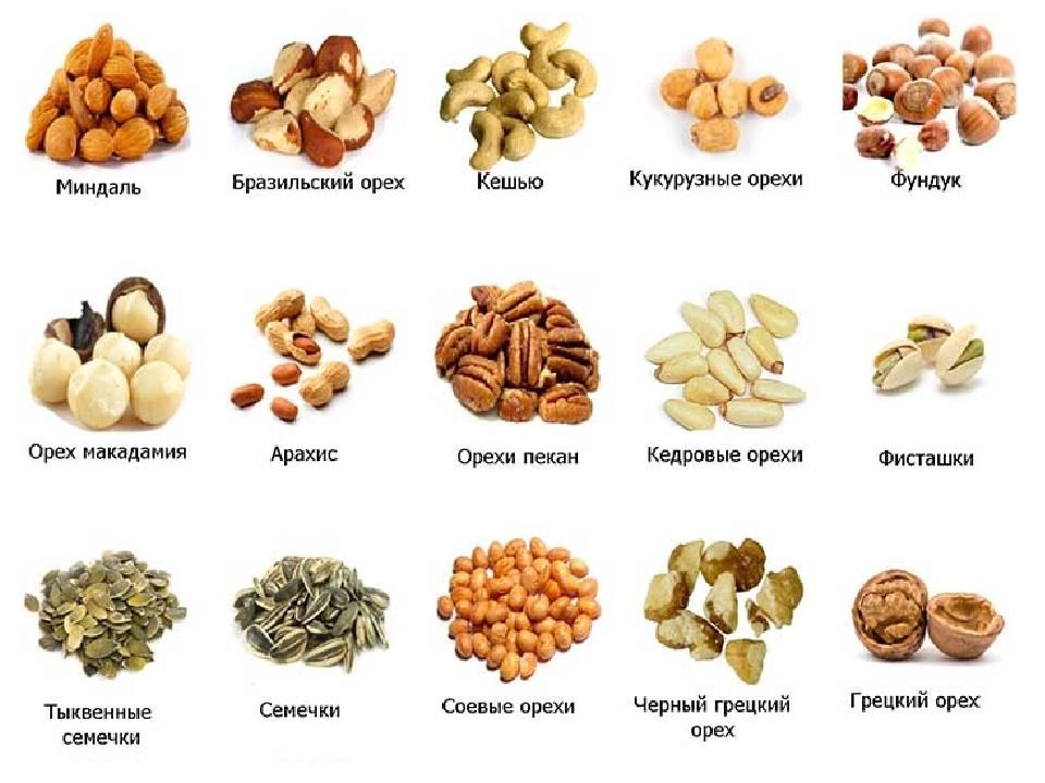 Орехи: польза и вред, виды, сравнительная таблица названий и калорийности