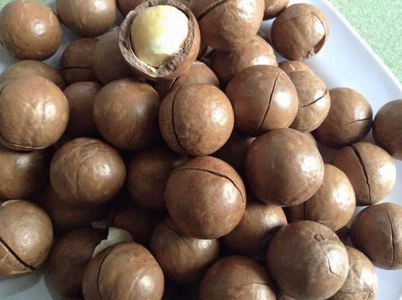 Скорлупа ореха макадамия: применение и использование в домашних условиях