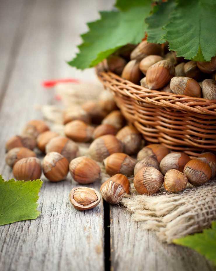 Лесной орех и фундук: в чем разница, фото, польза, вред - sadovnikam.ru