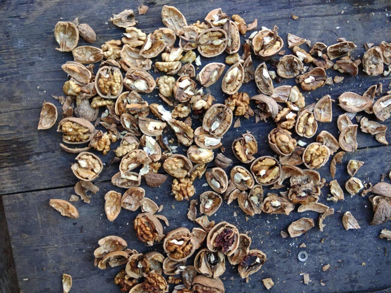 Как бороться с болезнями и вредителями грецкого ореха