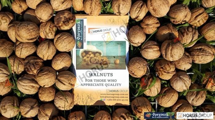 Биологические аспекты в селекции ореха грецкого — портал ореховод
