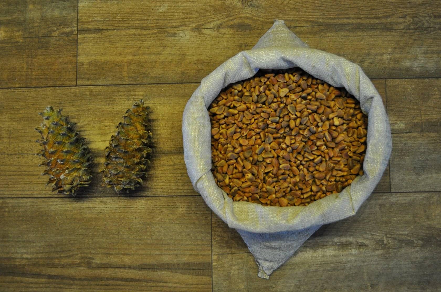 Скорлупа кедрового ореха применение