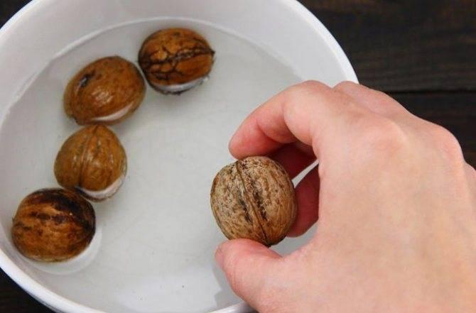 Как прорастить грецкий орех самостоятельно
