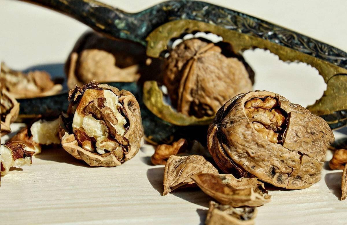 Болезни и вредители грецкого ореха, лечение и борьба с ними, фото