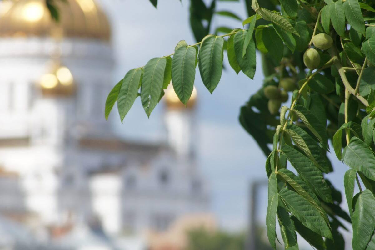 Орех - один из символов Болгарии