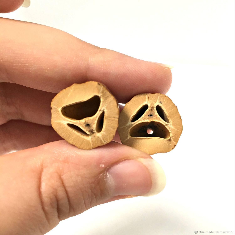 Орехи пили — плоды дерева канариум филиппинский