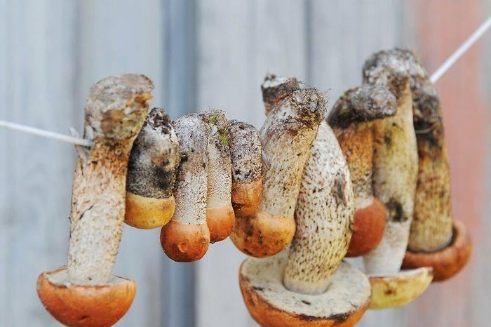 Сушка грибов: выбор и подготовка грибов, способы сушки