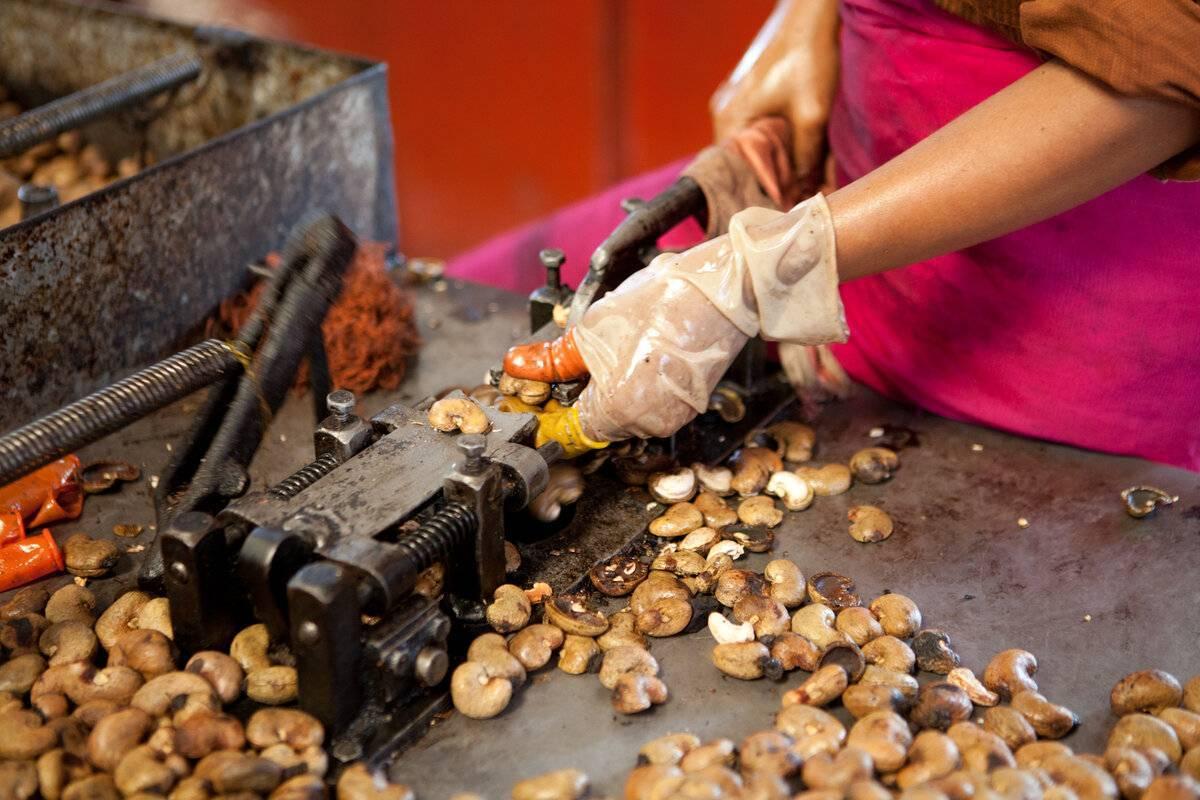 Орехи кешью: что это такое, это бразильский орешек или нет, как по-другому называется, нак каком дереве растут плоды, скорлупа акажу, как выглядит очищенный