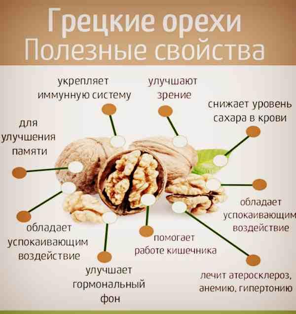 Грецкий орех: польза и вред, питательные и лечебные свойства, полезность орехового ядра для печени