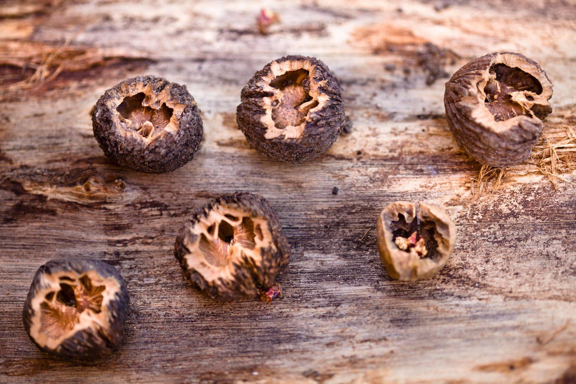 Грецкий орех – дерево жизни - посадка, выращивание и уход - огород, сад, балкон - медиаплатформа миртесен