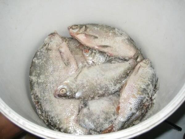 Засолка рыбы в домашних условиях. рецепты засолки красной рыбы, речной рыбы. способы засолки рыбы для сушки, вяления, копчения