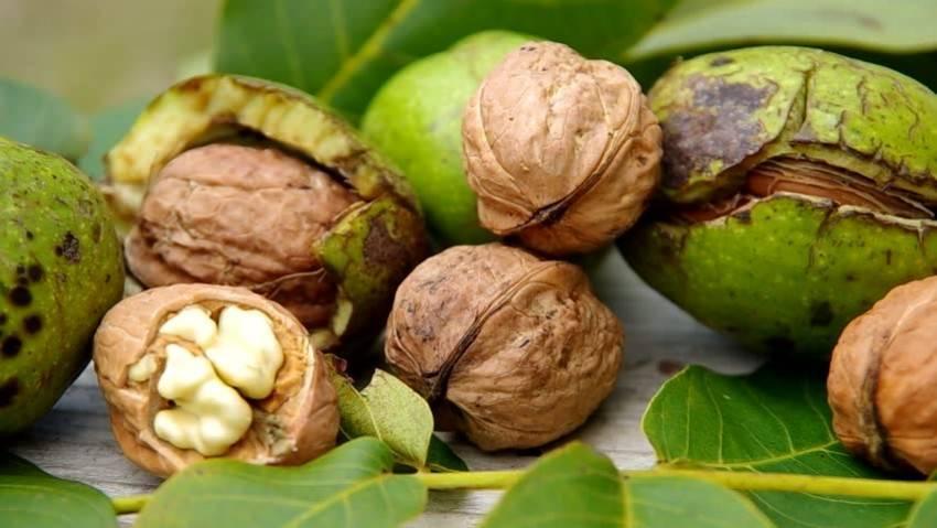 Что такое кокос: это орех или фрукт