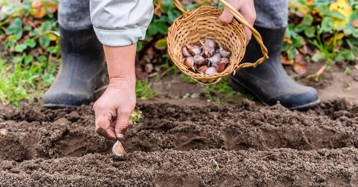 Как выглядит рассада арахиса. выращивание арахиса в открытом грунте: посадка и уход.