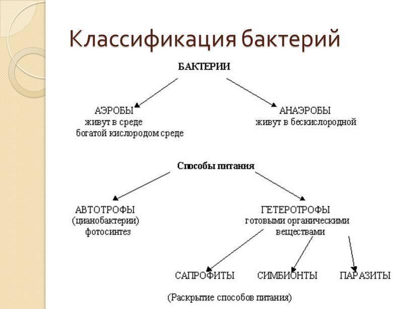 Систематика бактерий микробиология: классификация и номенклатура