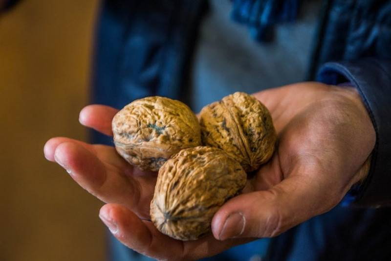 Бизнес на выращивании орехов (декабрь 2020) — vipidei.com