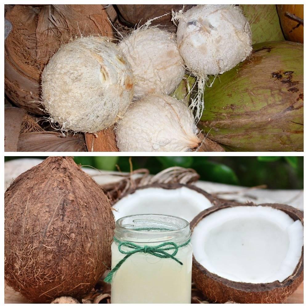 Что такое кокосовая вода и в чем ее особенность и польза для организма