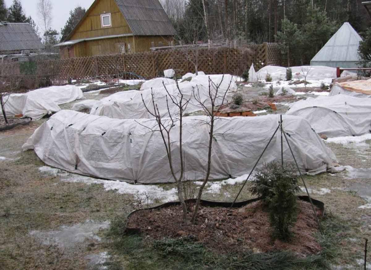 Как правильно укрывать молодые плодовые деревья на зиму