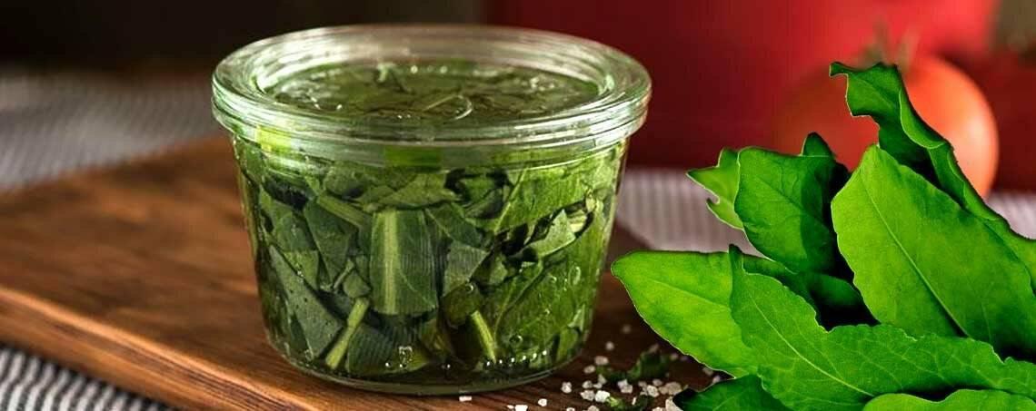 Как хранить шпинат и как заготовить шпинат на зиму в домашних условиях