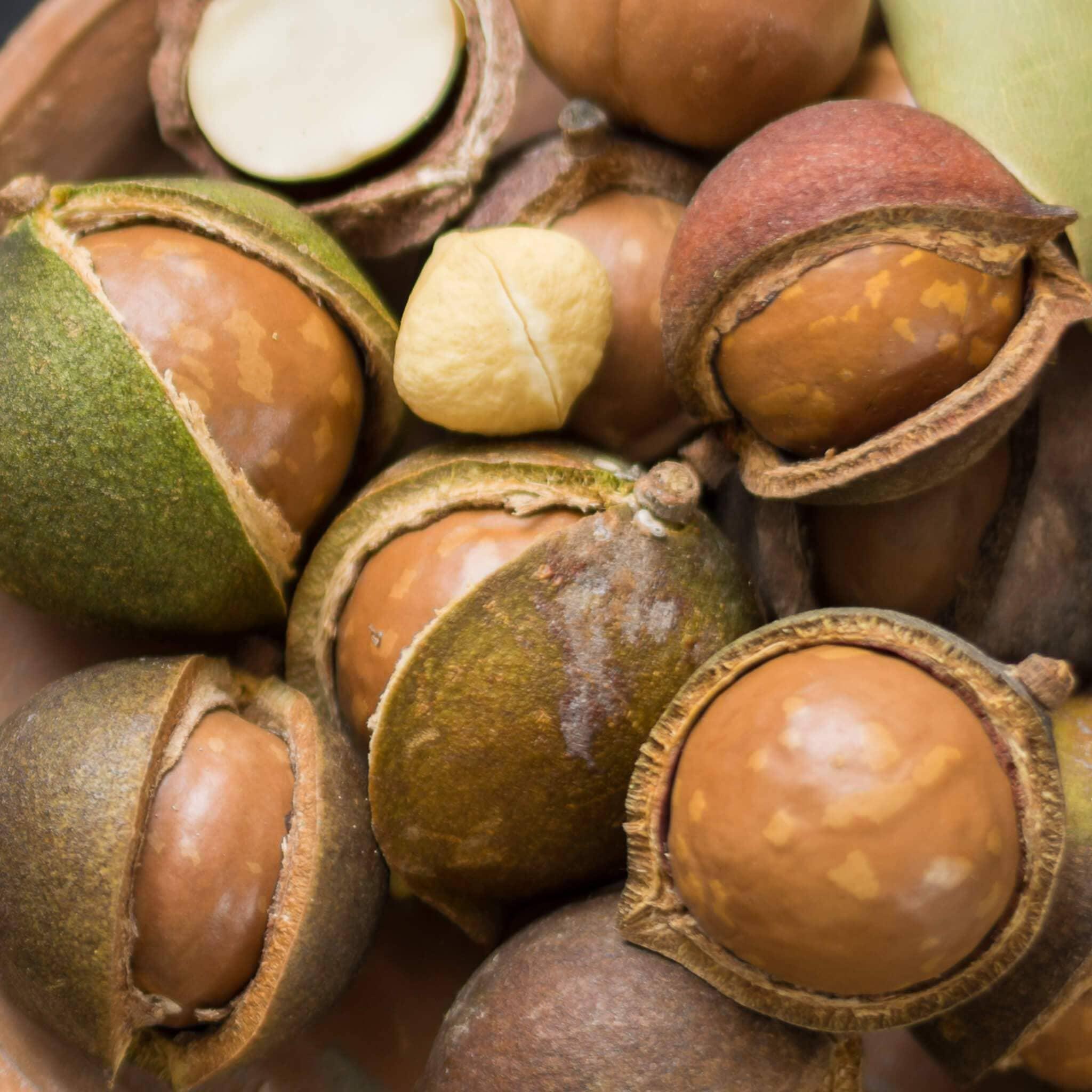 Орех макадамия: польза и вред | полезные свойства и противопоказания для женщин и мужчин
