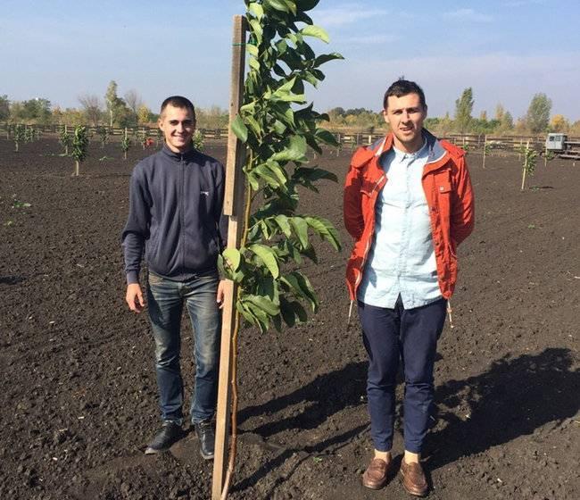 Вступление в ореховодство. часть 1 | fermer.ru - фермер.ру - главный фермерский портал - все о бизнесе в сельском хозяйстве. форум фермеров.