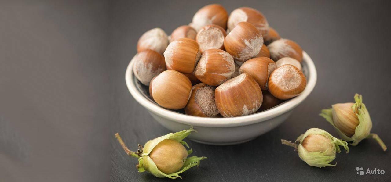 Орех фундук польза и вред для организма человека