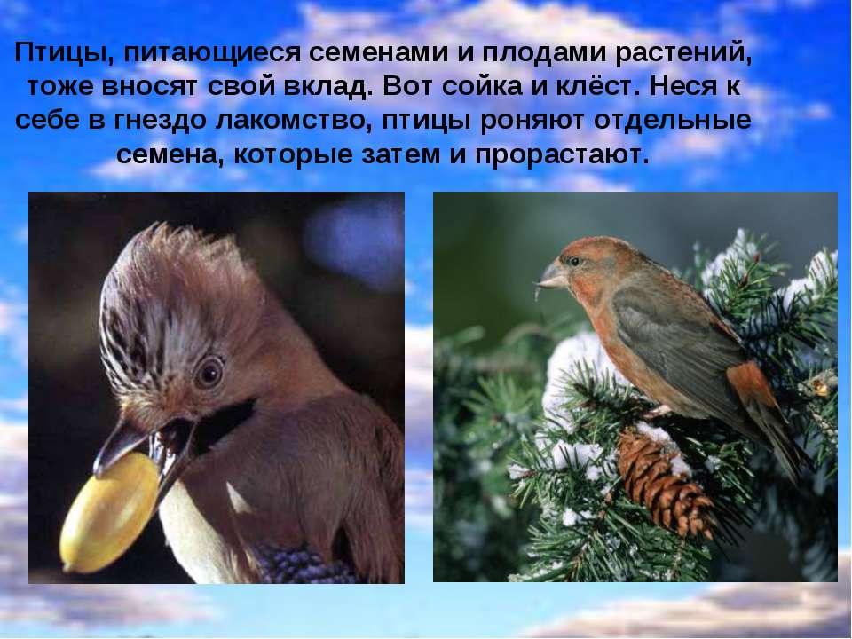 Растительноядные животные питаются растениями, кореньями и плодами