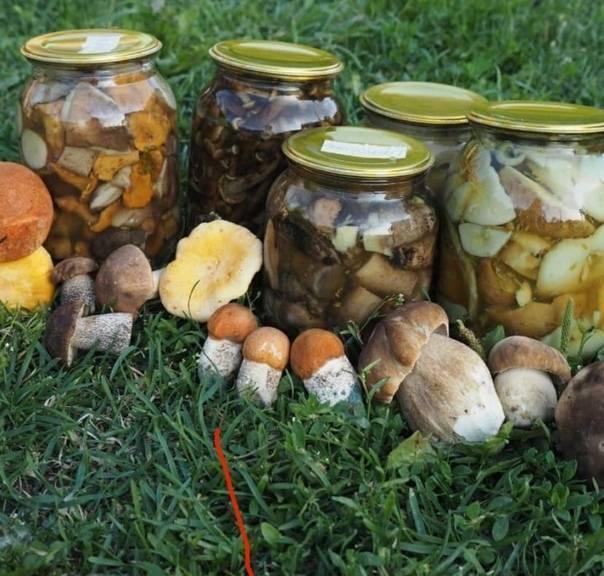 Как солить белые грибы в домашних условиях